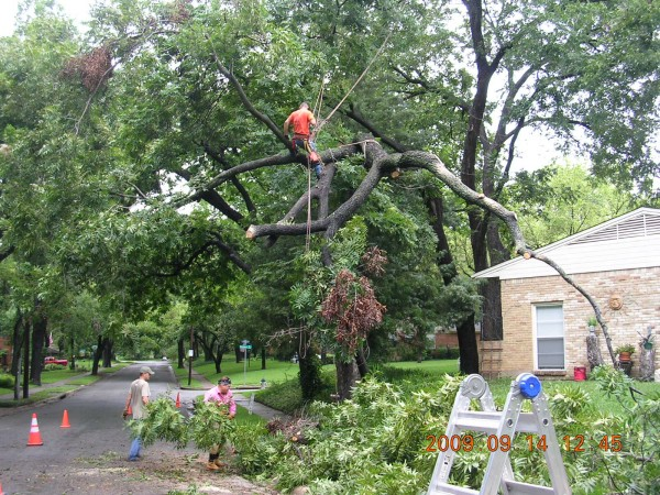 arborists emergency