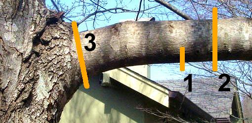 arborists trim tree branch